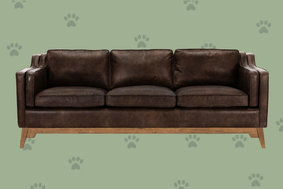 11 вам (и вашим пушистым друзьям) нравится самый лучший домашний диван - кровать